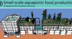 Review: United Nations Aquaponics Manual