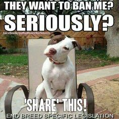 It is not the dogs that should be banned, but the owners there are evil enough to educate them to be turned