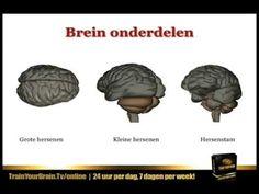 ▶ Gouden Brein Tip 1 - Leren leren - YouTube