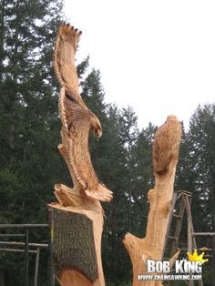 Eagles in a customers stump by Bob King www.chainsawking.com, www.facebook.com/chainsawking, Washington State