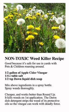 Natural weed killer they say really works. You don't have to spray chemicals in your yard!