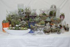 As mini Florestas Decorativas da ART BIO GARDEN são um pedaço de natureza para embelezar o seu ambiente.
