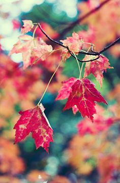 I love the colors of Autumn!