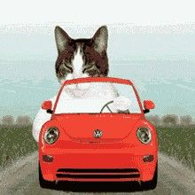 Animals Doing Funny Things, Funny Animals, Cute Animals, I Love Cats, Cool Cats, Animation, Funny Videos, Gato Gif, Foster Kittens