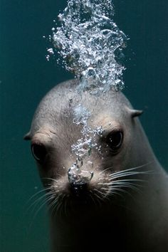 Under the water Under The Water, Under The Sea, Water Animals, Animals And Pets, Wild Animals, Baby Animals, Wild Life, Beautiful Creatures, Animals Beautiful