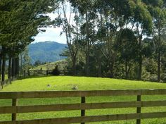 Beautiful rural property Bay of Islands region #HouseSitter Needed  near #Kawakawa   Northland, Bay of Islands New Zealand  May 20,2015 For 2 months
