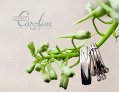 sweet caroline photo graphic design - guides, pricing, albums