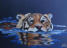 tigre- camboya