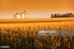 Stock Photo : Golden Harvest Sunrise with Corn Field and Grain Bin Silo