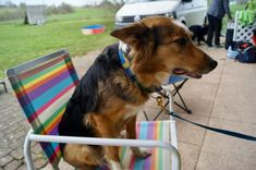 How to fix slow reactions to cues – Reward Based Dog Training