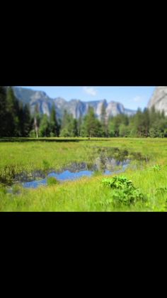 Yosemite flooded meadow