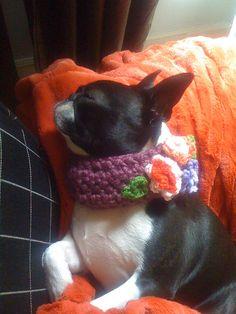 my Stella (sporting a collar from #beantownhandmade)