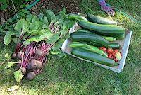 tips for the beginning gardener, including a garden plan