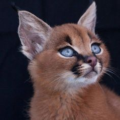This is such a beautiful cat, never seem to have seen one quite like this little guy!