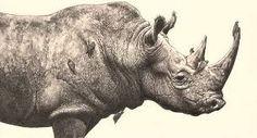 rhino head drawing outline ile ilgili görsel sonucu