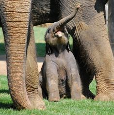 Tiny baby and huge mommy