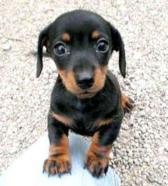 sometimes, when I need to smile, I just search for pictures of dachshunds... by tritkeddy
