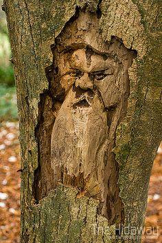 Tehidy tree spirits | Carvings in a dead tree stump at Tehid… | Flickr