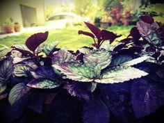 I love my garden- Aashita#myclicks#