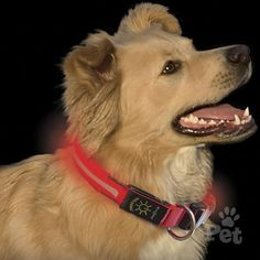 The Nite Ize Nite Dawg LED Light-Up Dog Collar is the answer to every night-loving dog owner's problem: losing sight of their best buddy after sundown. Available in three sizes, the Nite Dawg collar has two mode settings, flash and steady glow. Shutter Dogs, Led Dog Collar, Up Dog, Red Led, Hunting Dogs, Dog Supplies, Big Dogs, Dog Owners, Dog Love