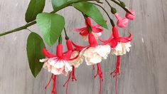 ABC TV | How To Make Double Fuchsia Paper Flower With Shape Punch - Craf...