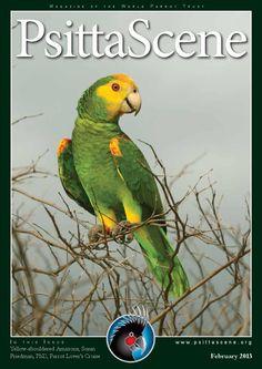 ISSUU - PsittaScene February 2013 by World Parrot Trust