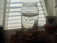 Feeding Nine on a Dime!: Self Cleaning-Glass Jar Aquarium (Post A)