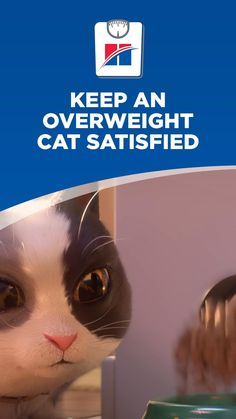 Worried about your overweight cat? Some of them may be cute, but concerns about a fat feline are just as common, and the first thing you should do is consult a veterinarian to find out if there's an underlying cause to the weight gain, such as a lack of exercise. It may be that they're simply eating too much food and expending too few calories. Cute Baby Cats, Cute Little Puppies, Tortie Kitten, Best Cat Food, Cat Nutrition, Cat Hacks, Cat Behavior, Funny Animal Videos, Pet Health