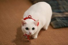 『猫侍 SEASON 2』フォト特集! ネコ好き悶絶必至の写真満載 - エンタメ - クランクイン!