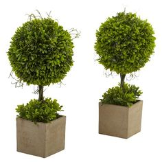 Liven up a room with the Set of 2 Boxwood Topiary with Planter in Green. These charming faux plants come complete with chic planter boxes and appear to be perfectly pruned. The rounded topiary bushes are perfect in a French country sitting room, or bringing a pop of color and life into a classic home. The faux foliage never needs watering, and the leaves stay lovely and green.