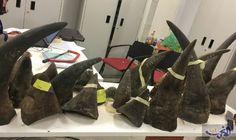 ضبط أكثر من مئة كيلوغرام من قرون…: اعلنت شرطة فيتنام أنها ضبطت أكثر من مئة كيلوغرام من قرون وحيد القرن أدخلت خلسة في حقائب آتية من كينيا.…