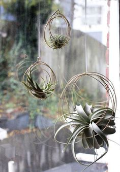 Small Tillandsia Ornaments air plant ornaments air plant hangers hanging plants bromeliads house warming gift brass decor - Plants On Wall - Ideas of Plants On Walls - Small Tillandsia Ornaments air plant ornaments by elainebjewelry Hanging Air Plants, Hanging Planters, Hanging Baskets, Indoor Plants, Hanging Gardens, Pot Plants, Diy Hanging, Shade Plants, Air Plant Display