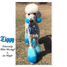 Thanks Helen Woodruff & Sue Wright for sharing can not stop looking at him. Yes, he must know he looks good. OPAWZ Innocent Blue..neat & diluted down to create varying shades of blue. Want a try, just do it, lol!!!OPAWZ are always here waiting for your outstanding works. www.opawz.com