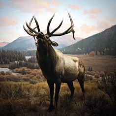 """Wapiti"" by Chad Wys, artist Source by ugallery Beautiful Creatures, Animals Beautiful, Cute Animals, Majestic Animals, Bull Elk, Elk Hunting, Animal Games, Mundo Animal, Nature Animals"