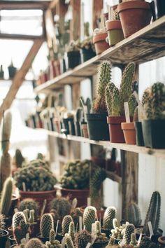 28. Succulents