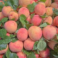peach, fruit, and aesthetic image Peach Aesthetic, Aesthetic Photo, Aesthetic Pictures, Angel Aesthetic, Spring Aesthetic, Aesthetic Food, Living In London, Behind Blue Eyes, Just Peachy