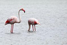Pink Flamingo à Lattes France Travel, Pink Flamingos, Summer 2014, Family Travel, Barcelona, Paris, Family Trips, Montmartre Paris, Flamingos