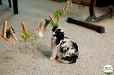 Sisal string, clothespins, and vegetables make for a very happy bunny! Can try this DIY rabbit toy idea to entertain guinea pigs too. Use while supervised.