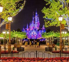 Welcome to Shanghai Disney!