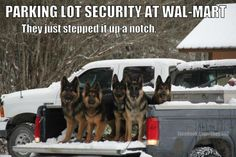 Good job boys and girls! #dogs #pets #GermanShepherds Facebook.com/sodoggonefunny