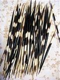 porcupine quills, large, african porcupine quills, striped quills, altered art, curiosities