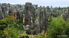 Stone forest, Shilin national park, China.