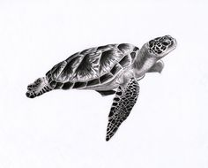 Sea turtle 1 by PunkyMeadows.deviantart.com on @DeviantArt