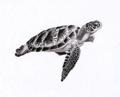Sea turtle 1 by PunkyMeadows.deviantart.com on @DeviantArt