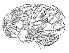 Your brain is brilliant and also a bit dumb. Here are some amazing facts about your brain and ways to use that information to help you live an easier life. Brain Anatomy, Human Anatomy And Physiology, Psychology Major, School Psychology, Psychology Memes, Cognitive Psychology, Reticular Activating System, Psych Major, Brain Mapping