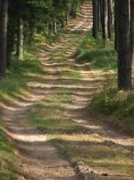fotos waldwege - Google-Suche