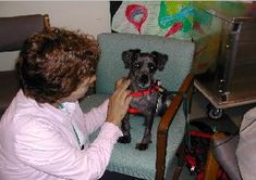 The therapeutic use of pets (such as dogs, cats, fish, and horses) is often used within occupational therapy practice and it is considered to be a sensory modulation approach.