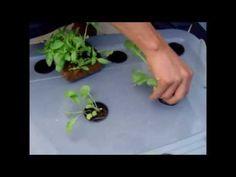 Huerto en casa, cultivo en solución (1a. parte)