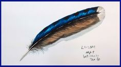 Blue Jay Feather in Watercolor full tutorial Working in layers and with Sennelier watercolors we will draw and paint a lovely blue jay feather. This is a rea...