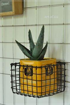Kaktus - cactus - tea caddy